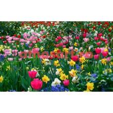 Flori de primavara cod E10